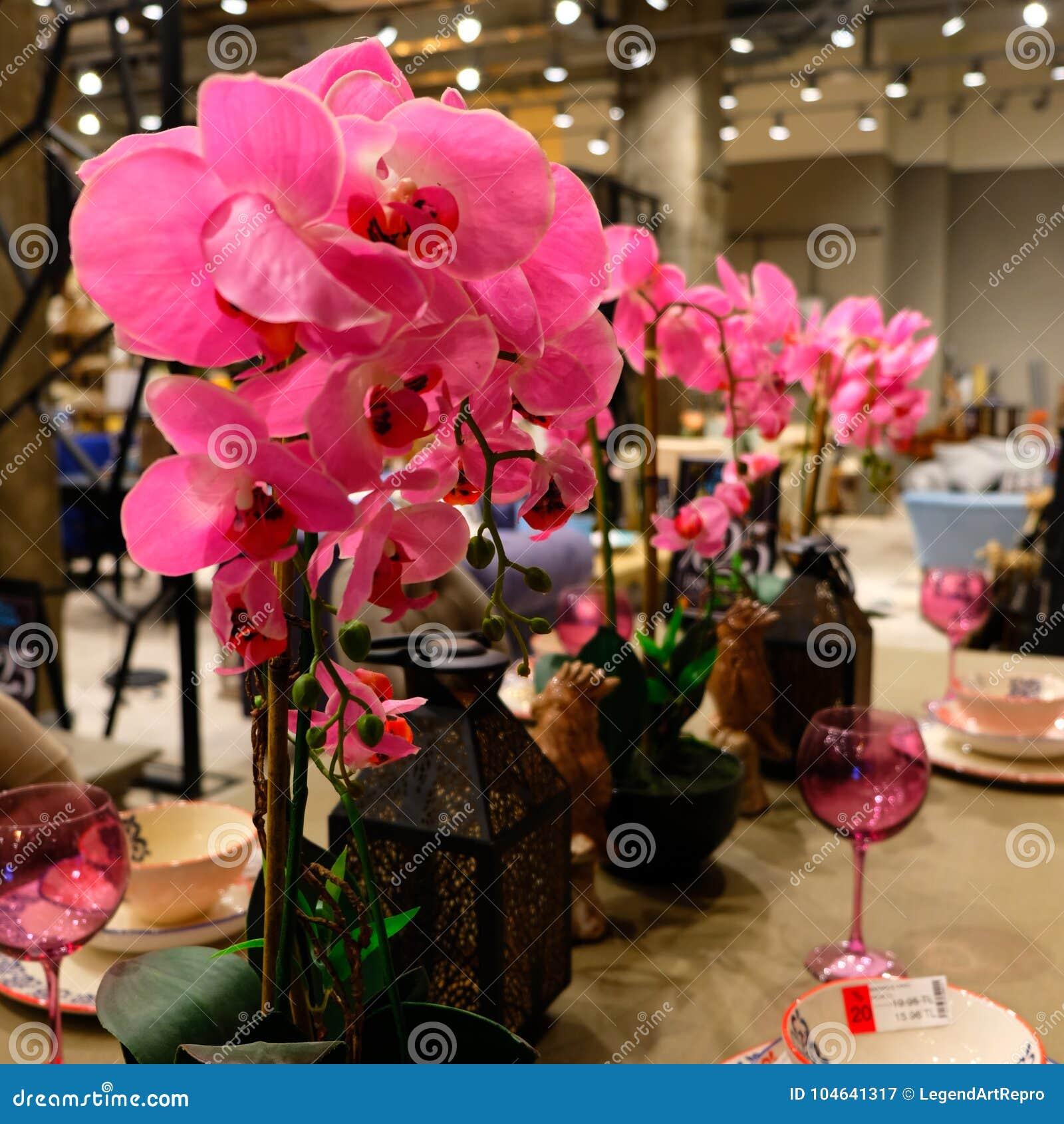 Download Roze Orchidee, Decoratieve Lichten, Roze Drinkbeker, Oude Stijl Decoratieve Lijst Stock Afbeelding - Afbeelding bestaande uit winkel, lichten: 104641317