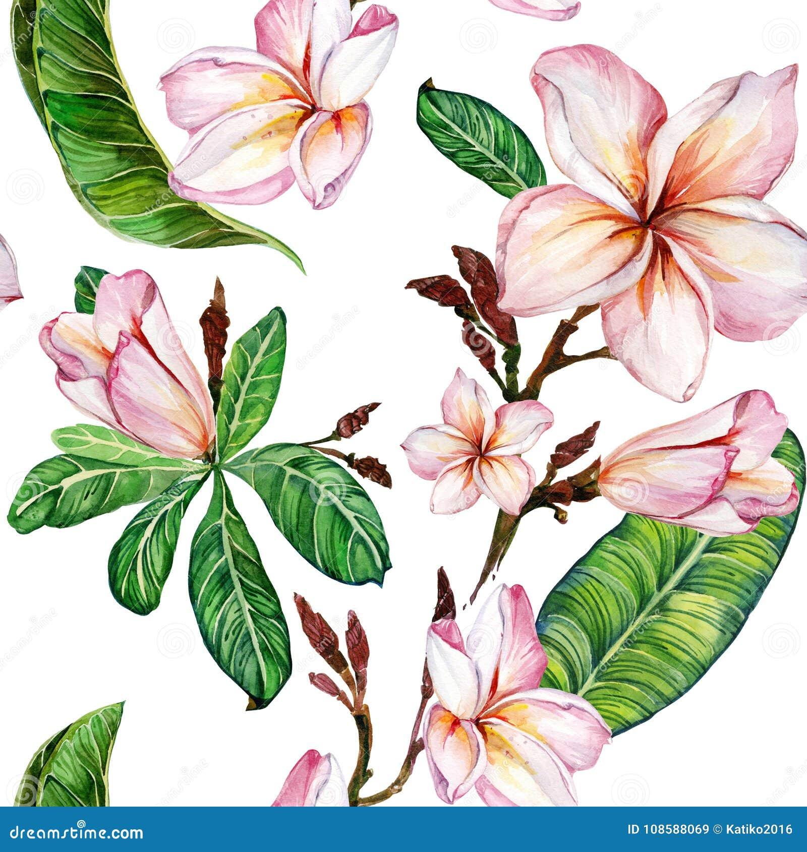 Roze plumeriabloem op een takje Naadloos BloemenPatroon Geïsoleerdj op witte achtergrond Het Schilderen van de waterverf