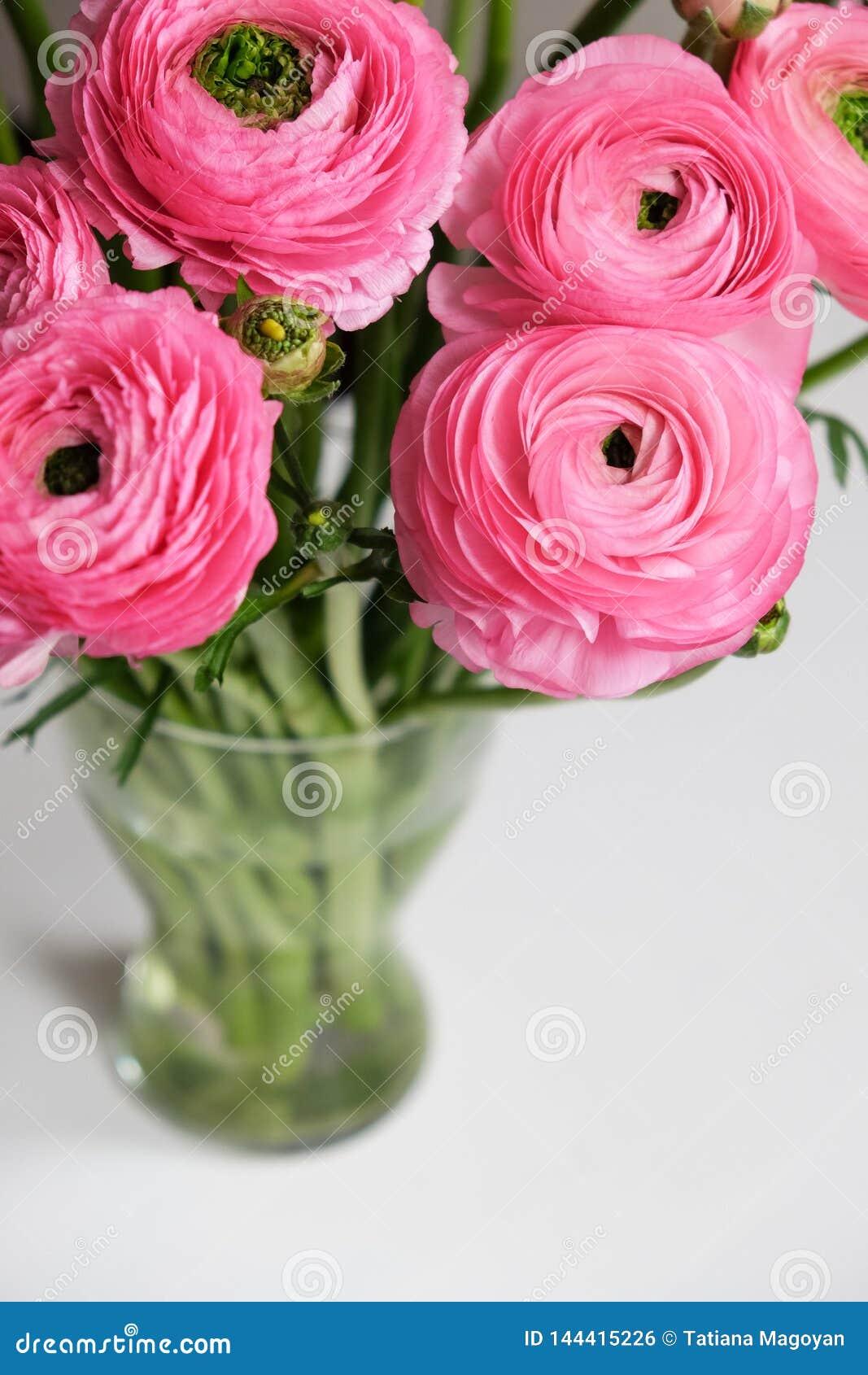 Roze Ranunculus boeket in transparante glasvaas op witte lijst Close-up Voor kleurrijke groetkaart, bloemlevering