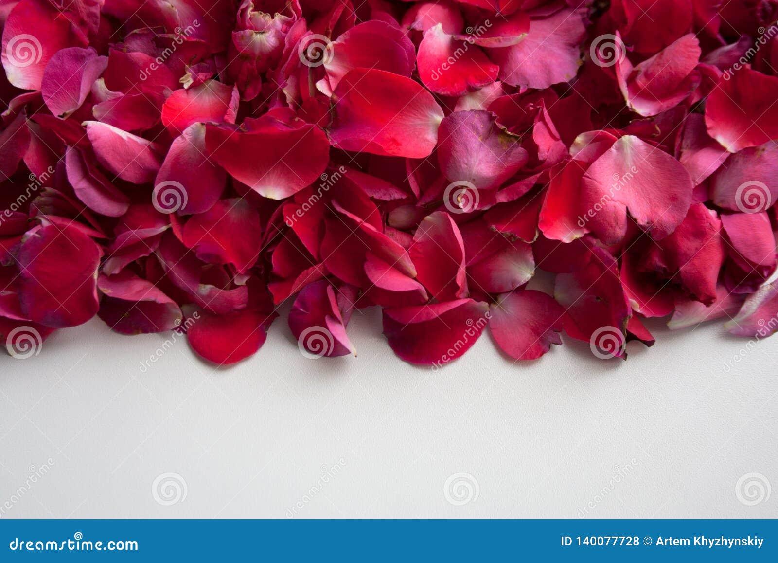 Roze, rode en purpere bloembloemblaadjes op witte achtergrond