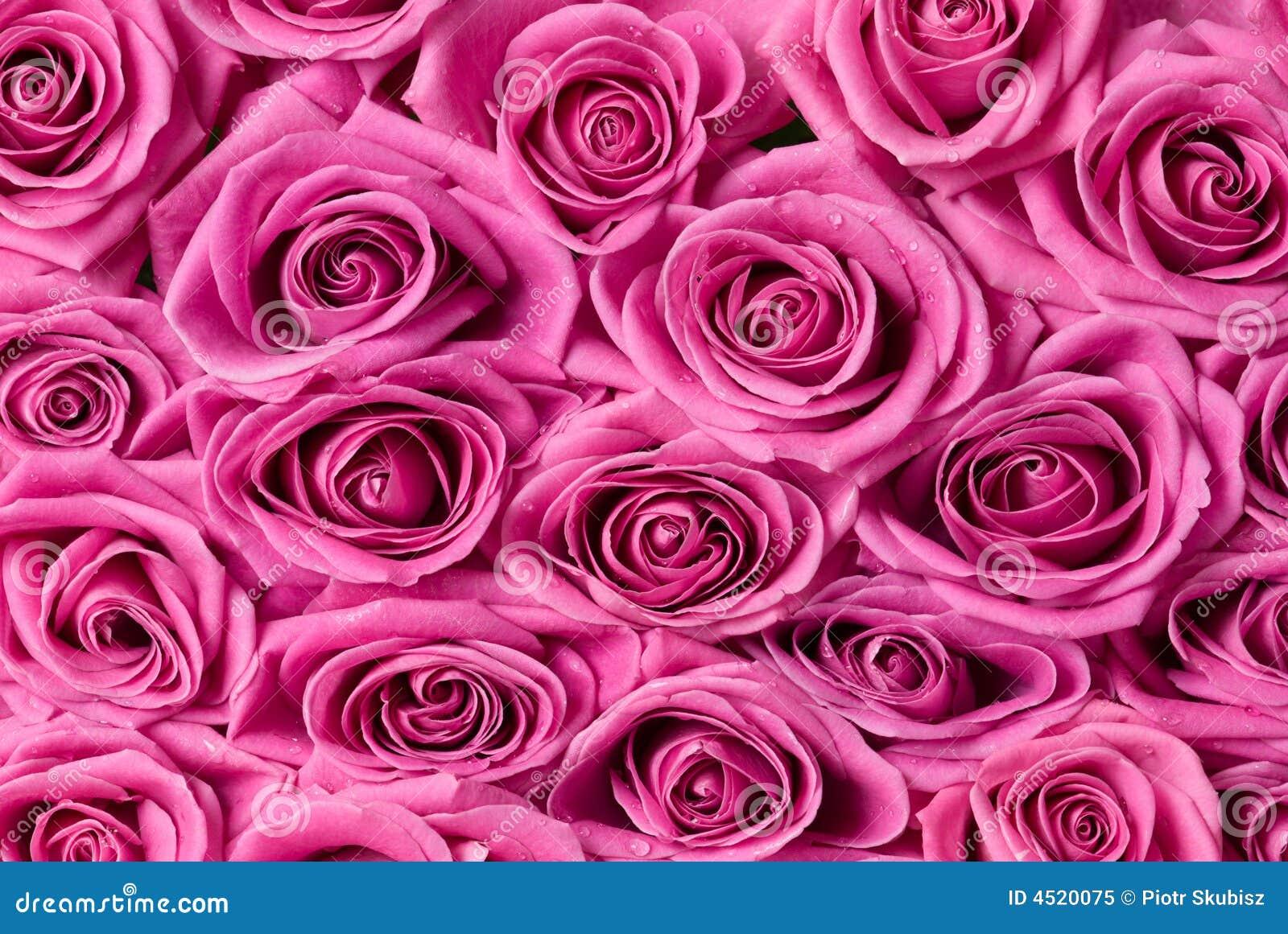 Roze rozen.