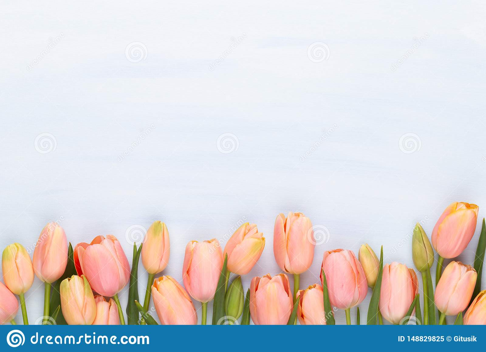 Roze tulp op de uitstekende houten achtergrond De groetkaart van de moederdag