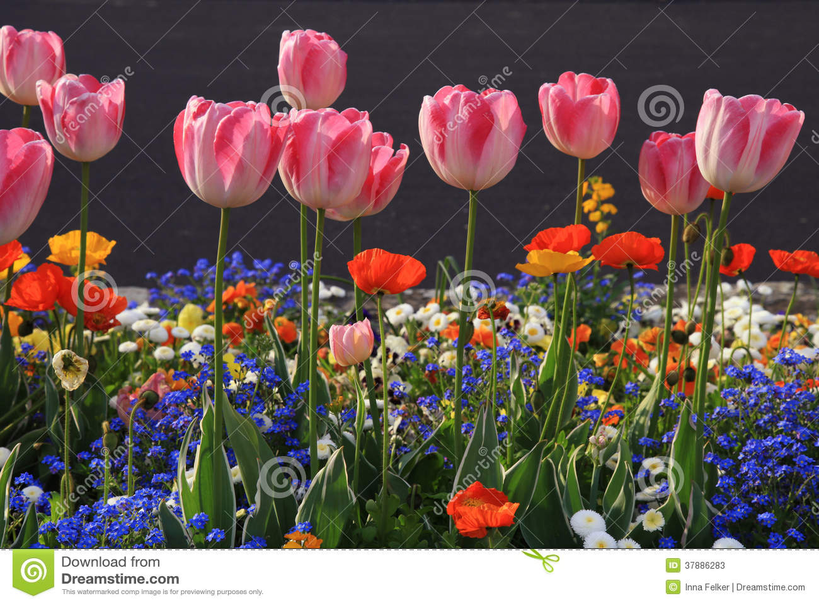 Roze tulpen en multicolored tuinbloemen