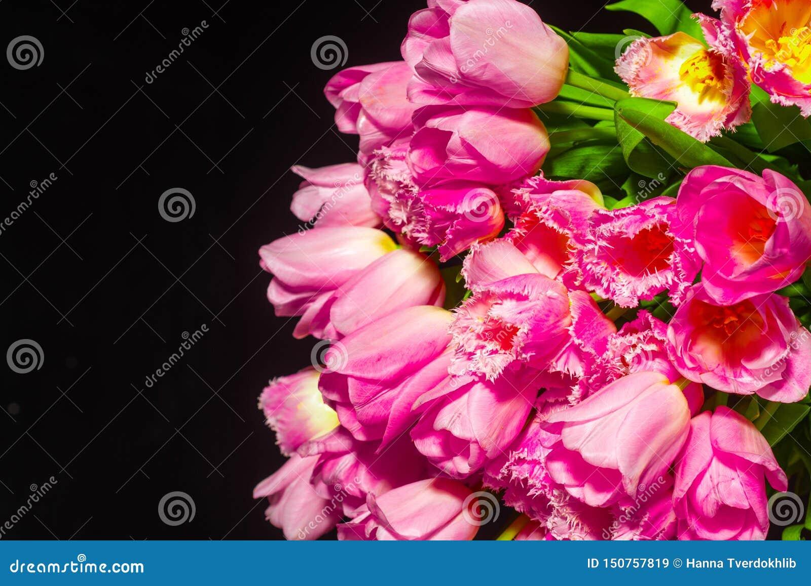 Roze Tulpen op zwarte achtergrond Vlak leg, hoogste mening De achtergrond van valentijnskaarten Boeket van roze tulpen op een lic