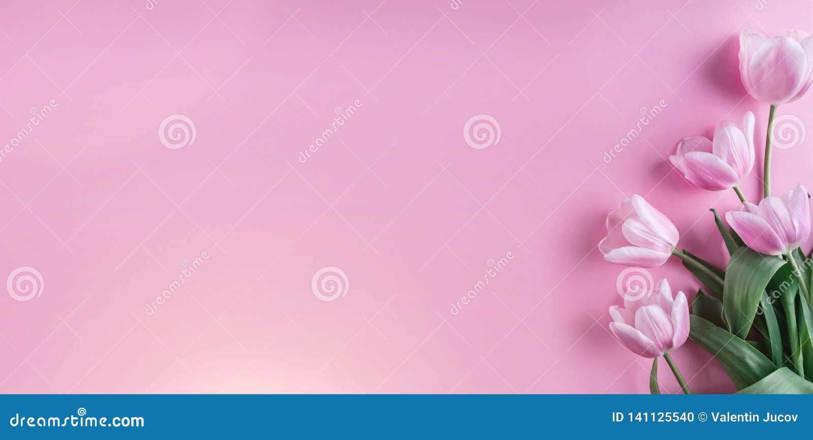 Roze tulpenbloemen op roze achtergrond Kaart voor Moedersdag, 8 Maart, Gelukkige Pasen Het wachten op de lente De kaart van de gr