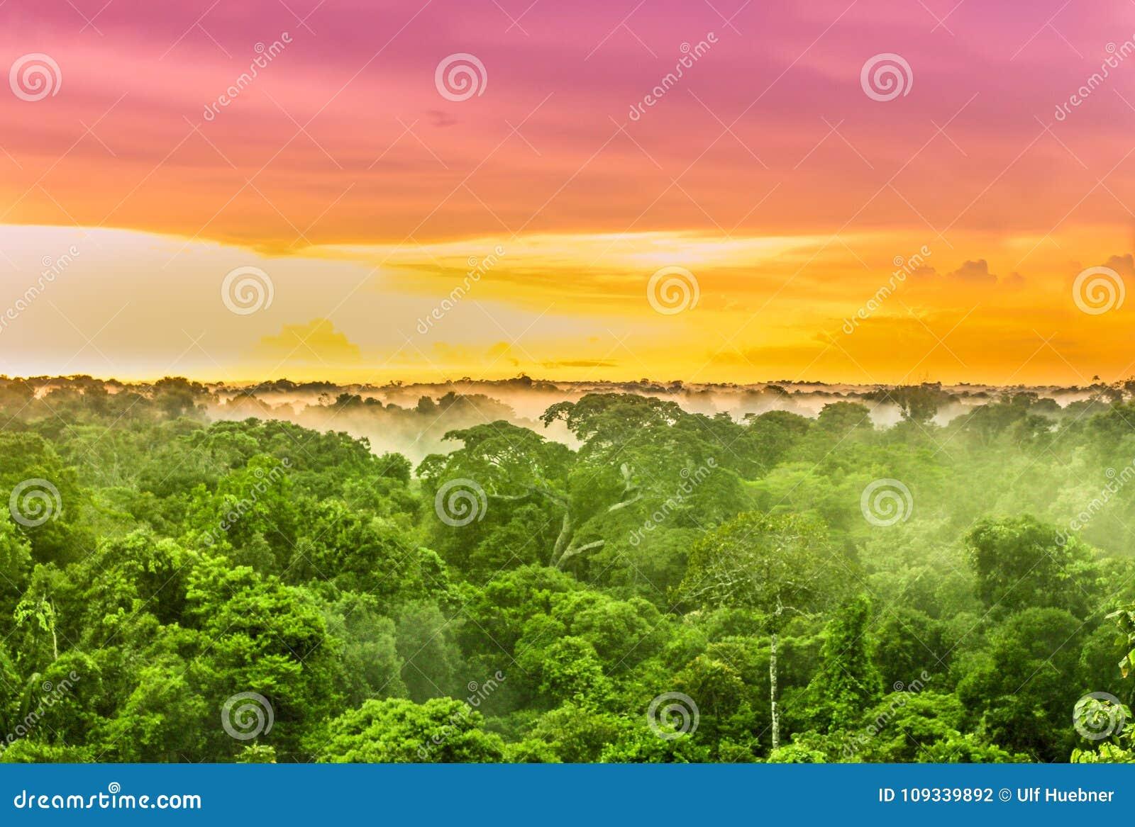 Roze zonsondergang over het regenwoud van Amazonië in Brazilië