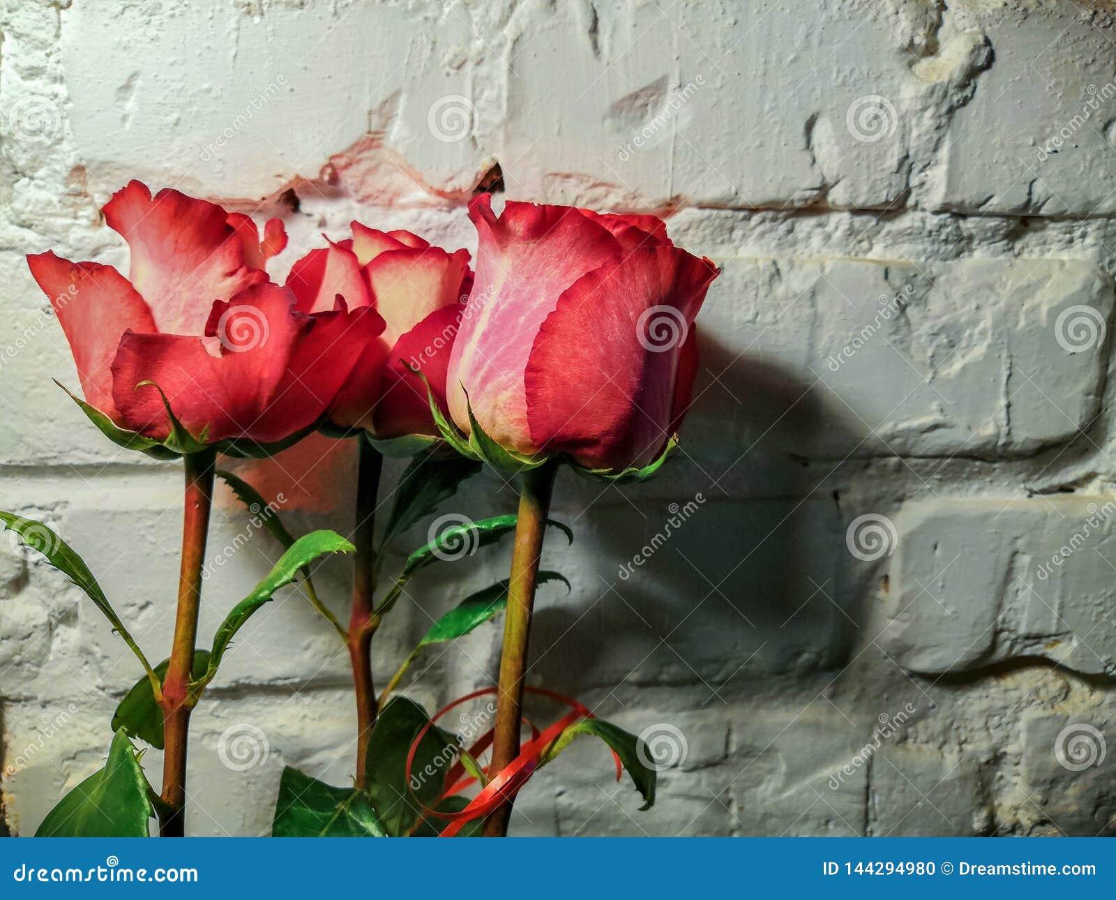 Rozen tegen een witte bakstenen muur
