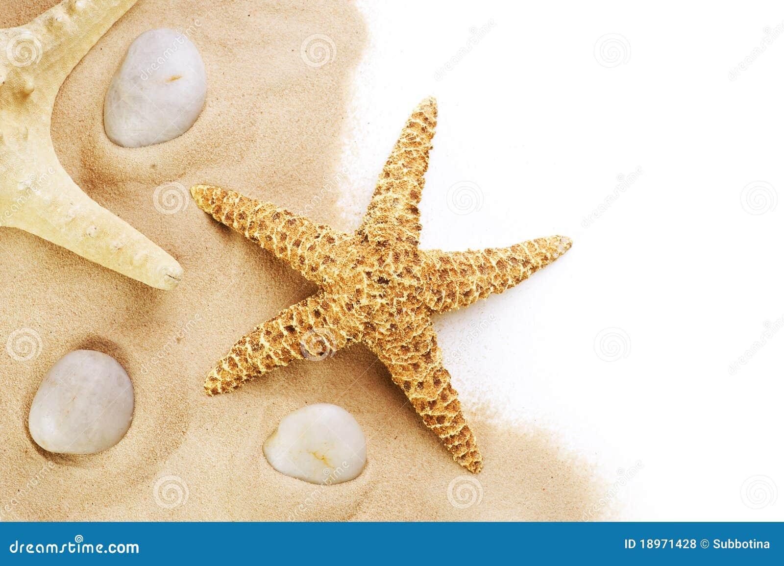 Rozgwiazda