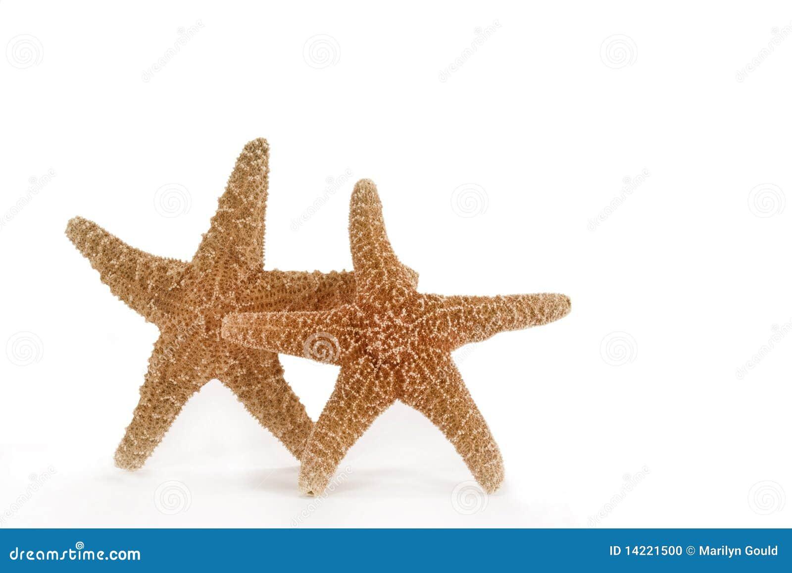Rozgwiazda dwa