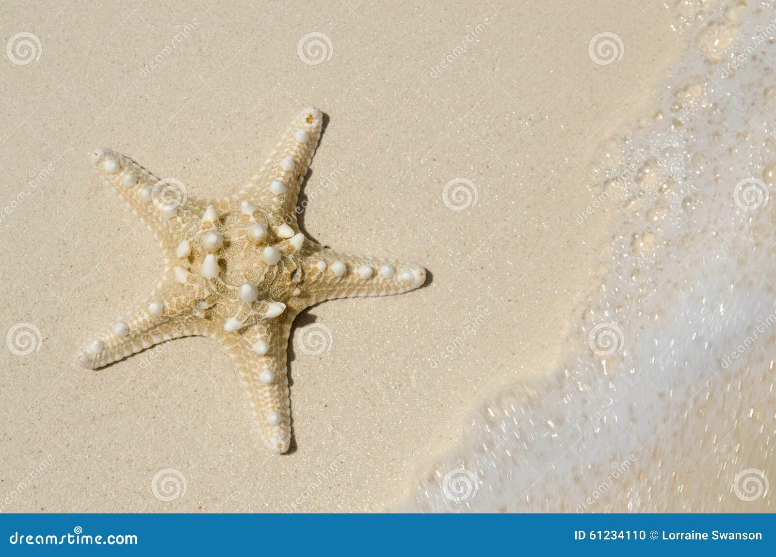 Rozgwiazda na plaży z przypływu przybyciem Wewnątrz