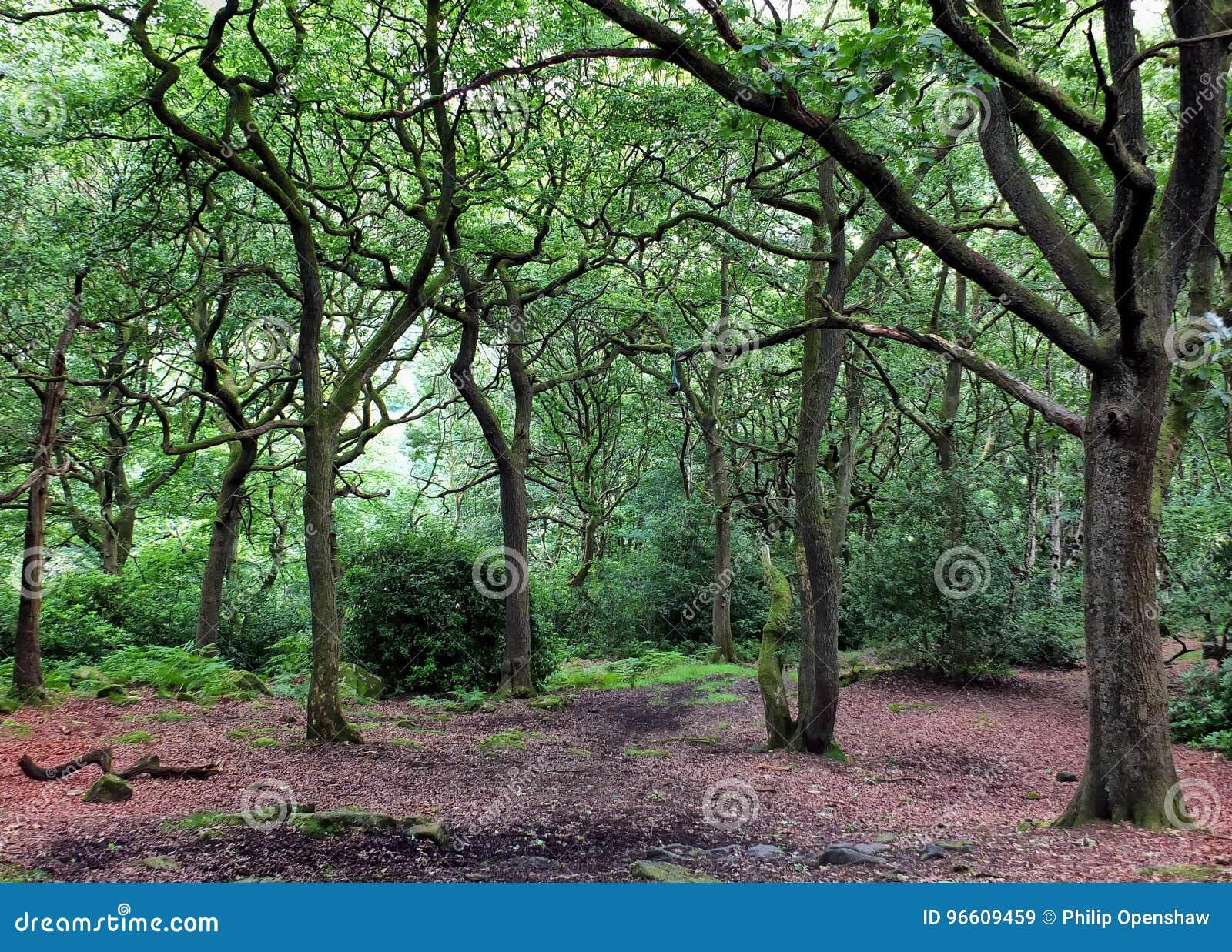 Rozjaśniać w dębowym lasu lesie z zielonymi drzewami