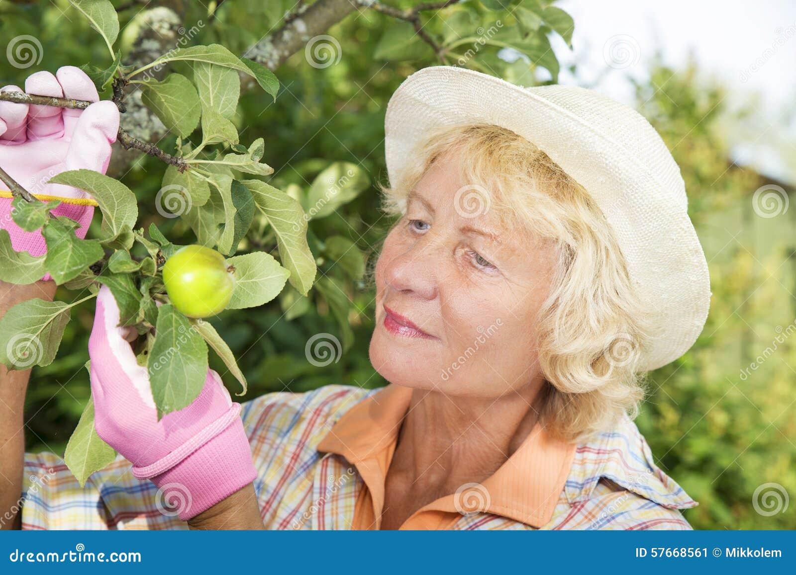 Rozochoceni starsi kobiety zrywania jabłka w ogródzie