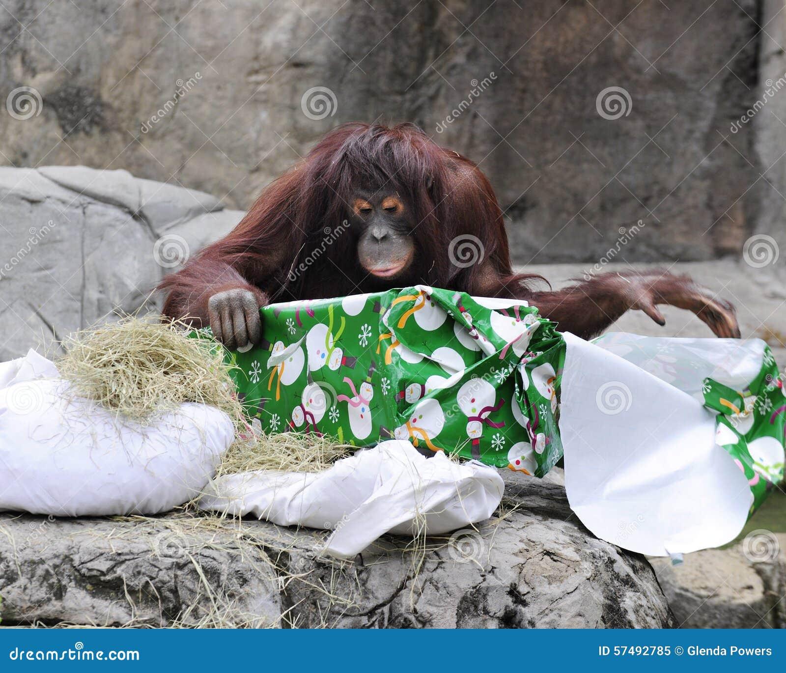 Rozpakowywań boże narodzenia przy zoo