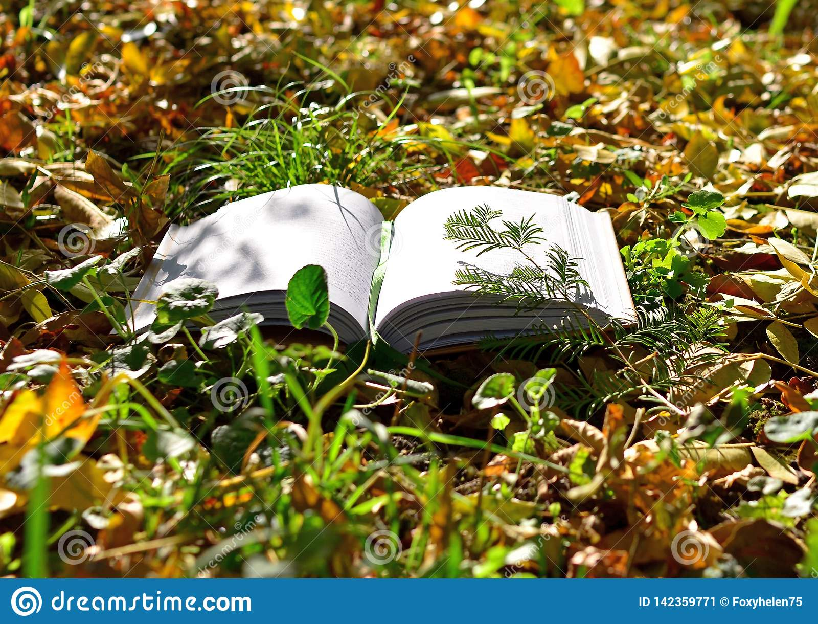 Rozpieczętowana książka kłama na trawie w parku