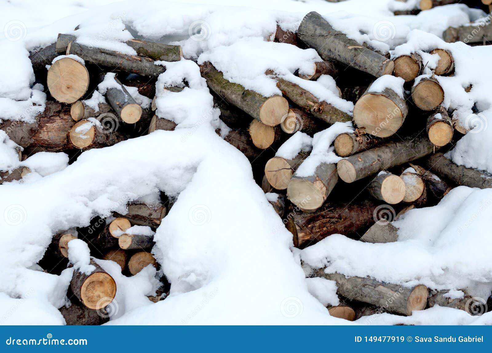 Rozsypisko twardego drzewa i drewna mi?kkiego bele