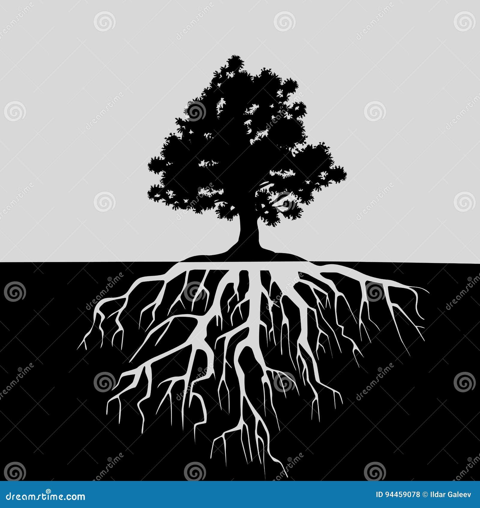 Rozszczepiony widok dębowy drzewo i swój korzenie Czarny i biały ilustracja