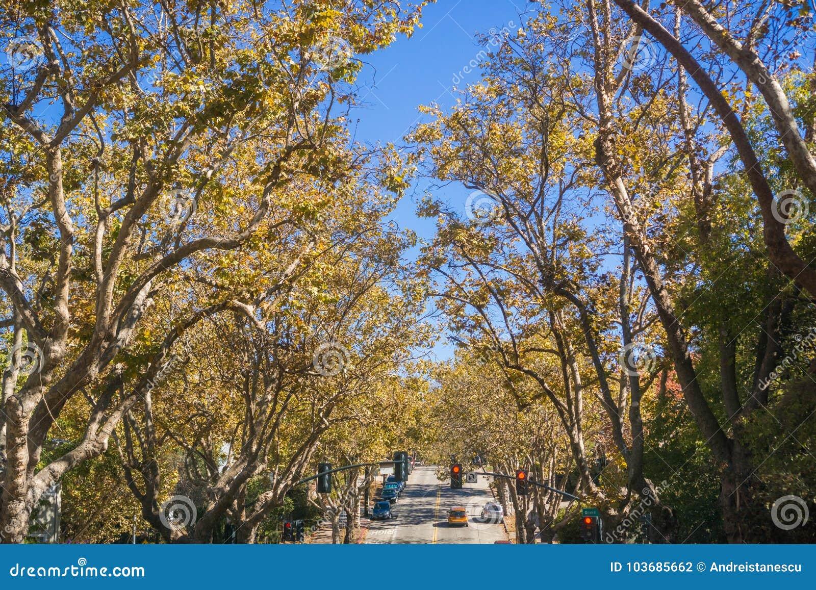 Rua Árvore-alinhada em uma vizinhança residencial em um dia ensolarado do outono