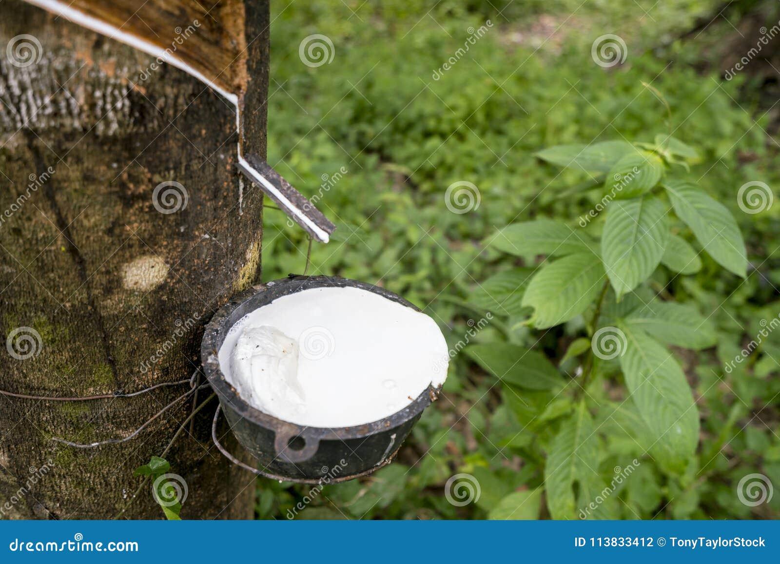 Rubber die sap onttrekken