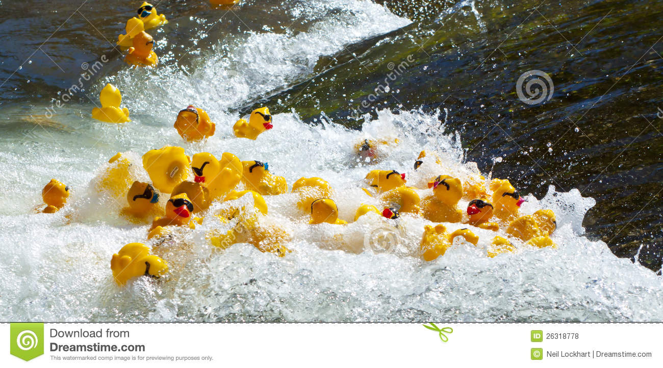 Rubber Duck Racing Editorial Stock Photo Image Of Water