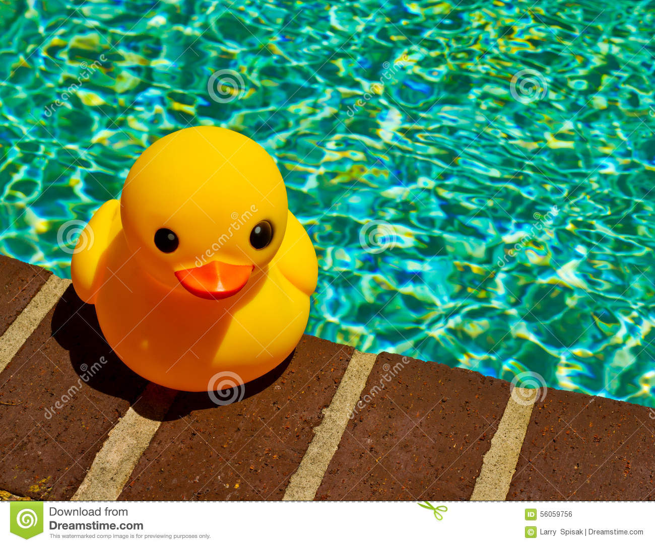 yellow duck swimming rubber duck on side of pool stock ...