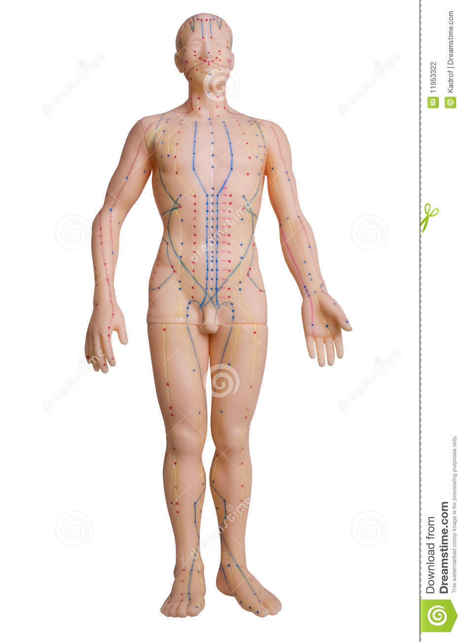 Rubber Mannequin With Massage Pressure Points Stock Photo Image Of