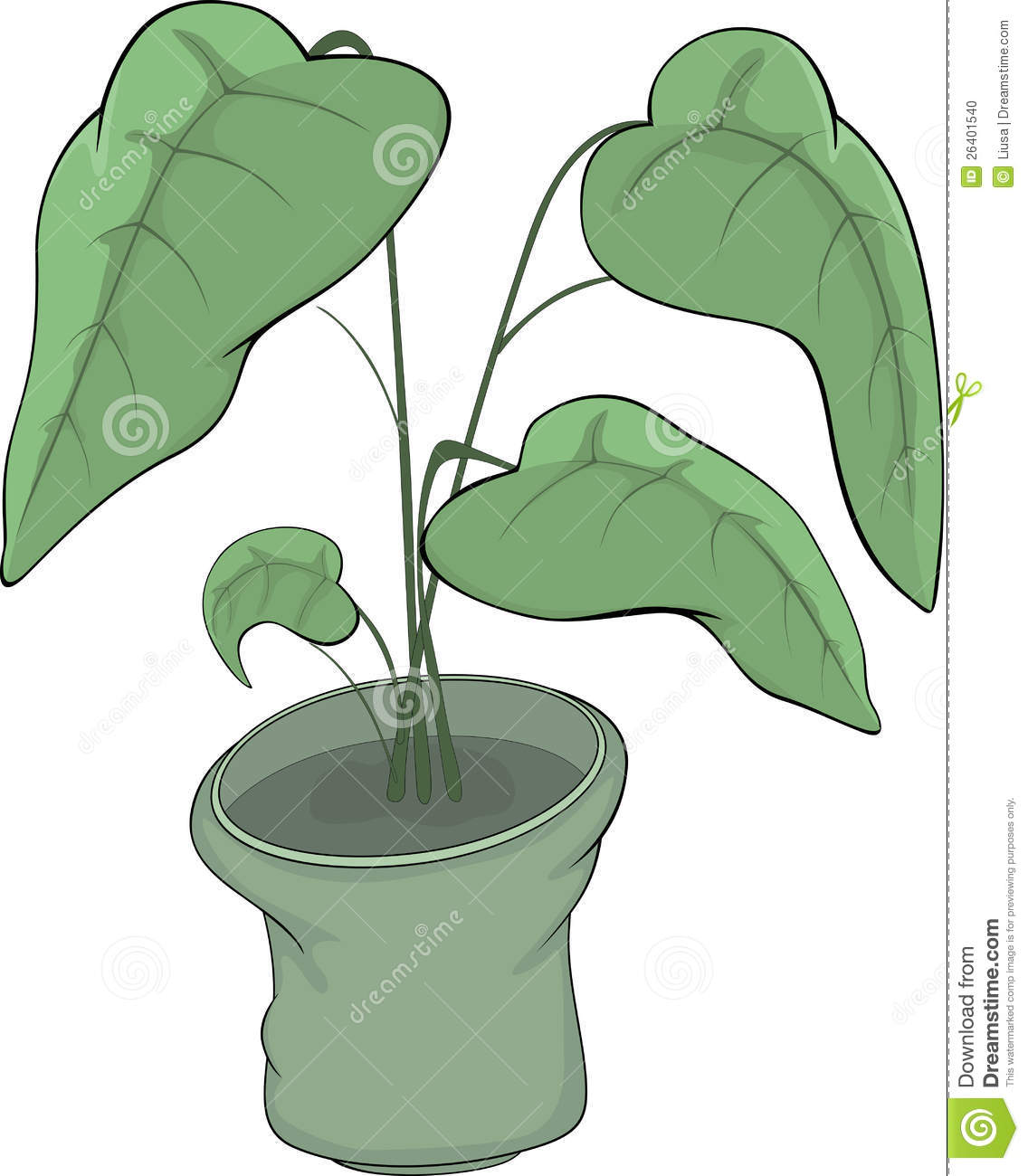 Rubber Plant In A Pot Stock Vector Illustration Of Garden 26401540
