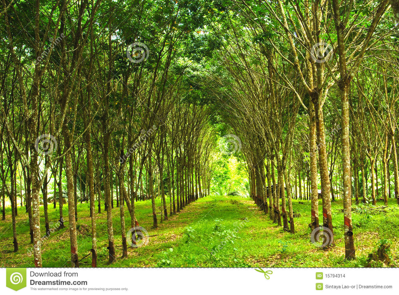 Rubber plantation business plan