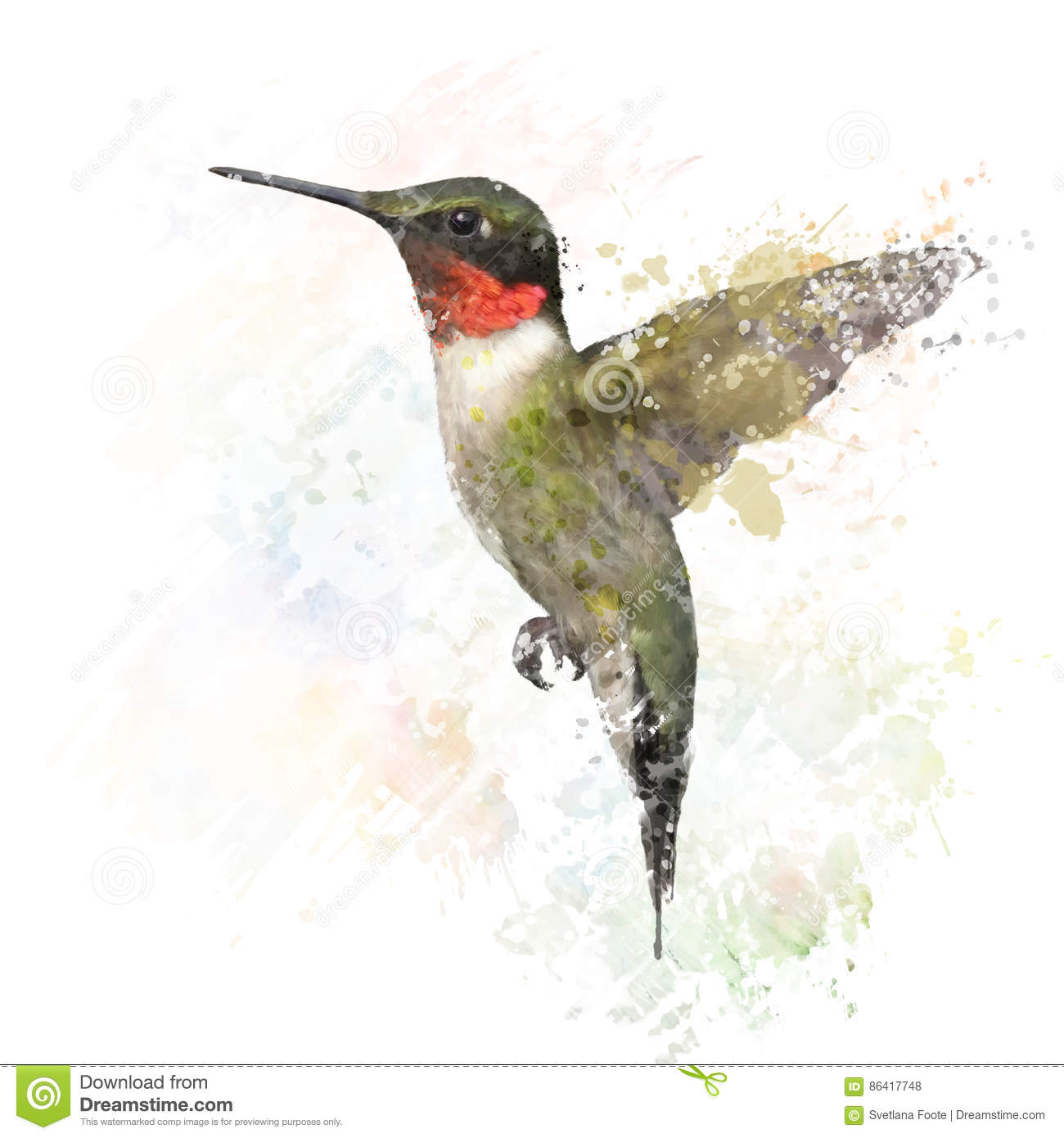 Ruby Throated Hummingbird Watercolor Illustration Stock