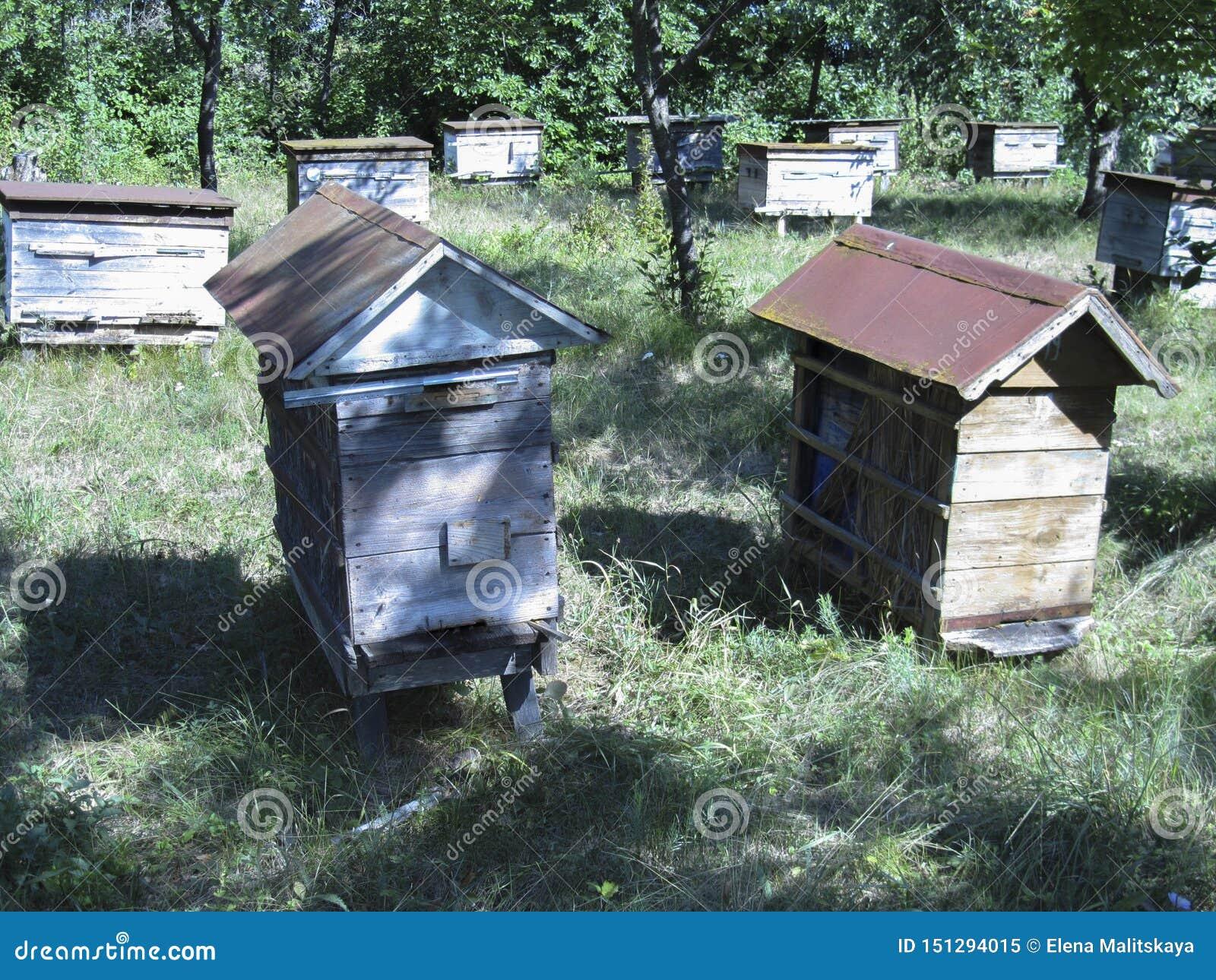 Ruche avec des abeilles dans un rucher