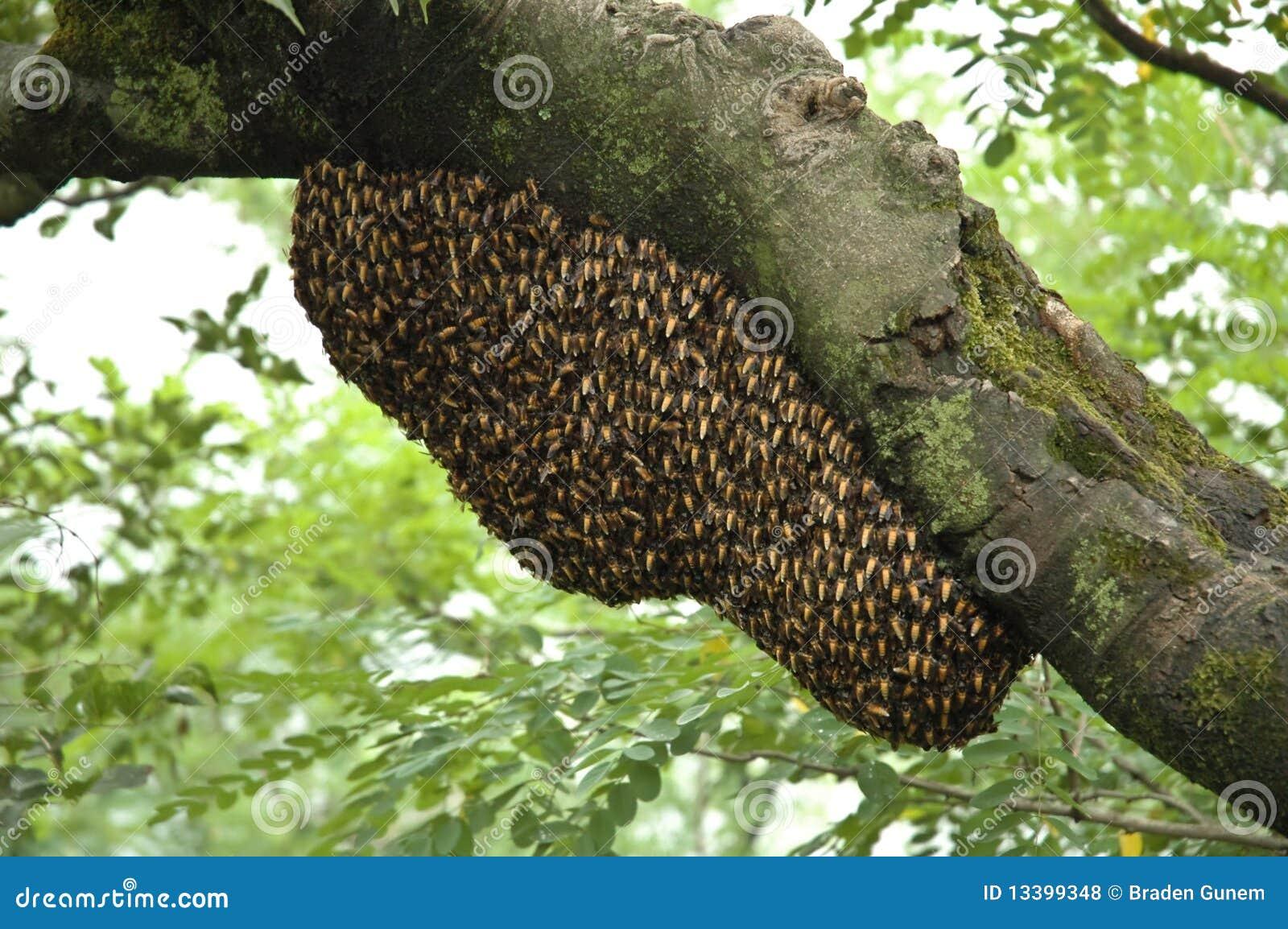 Ruche d abeille