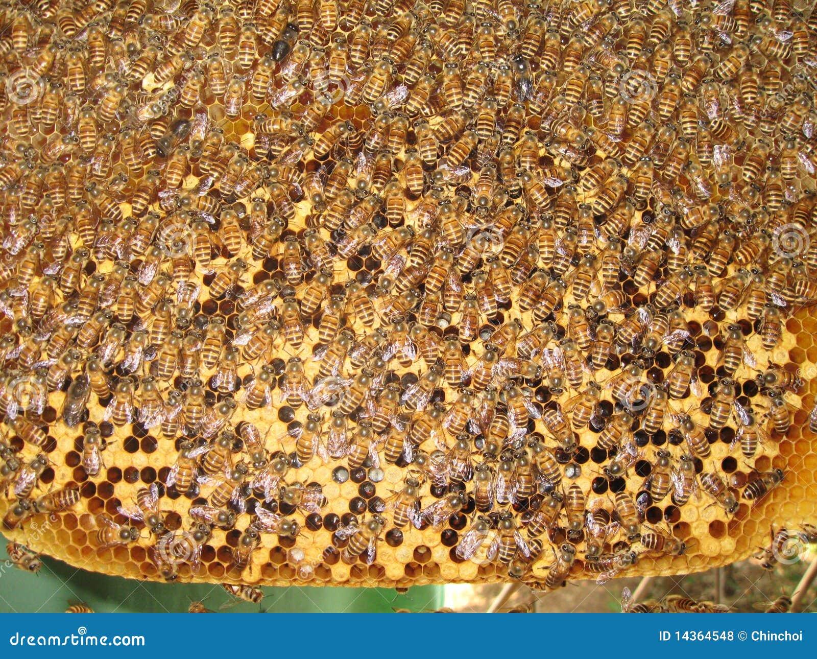 ruche d 39 abeille photo stock image du botanique nature 14364548. Black Bedroom Furniture Sets. Home Design Ideas