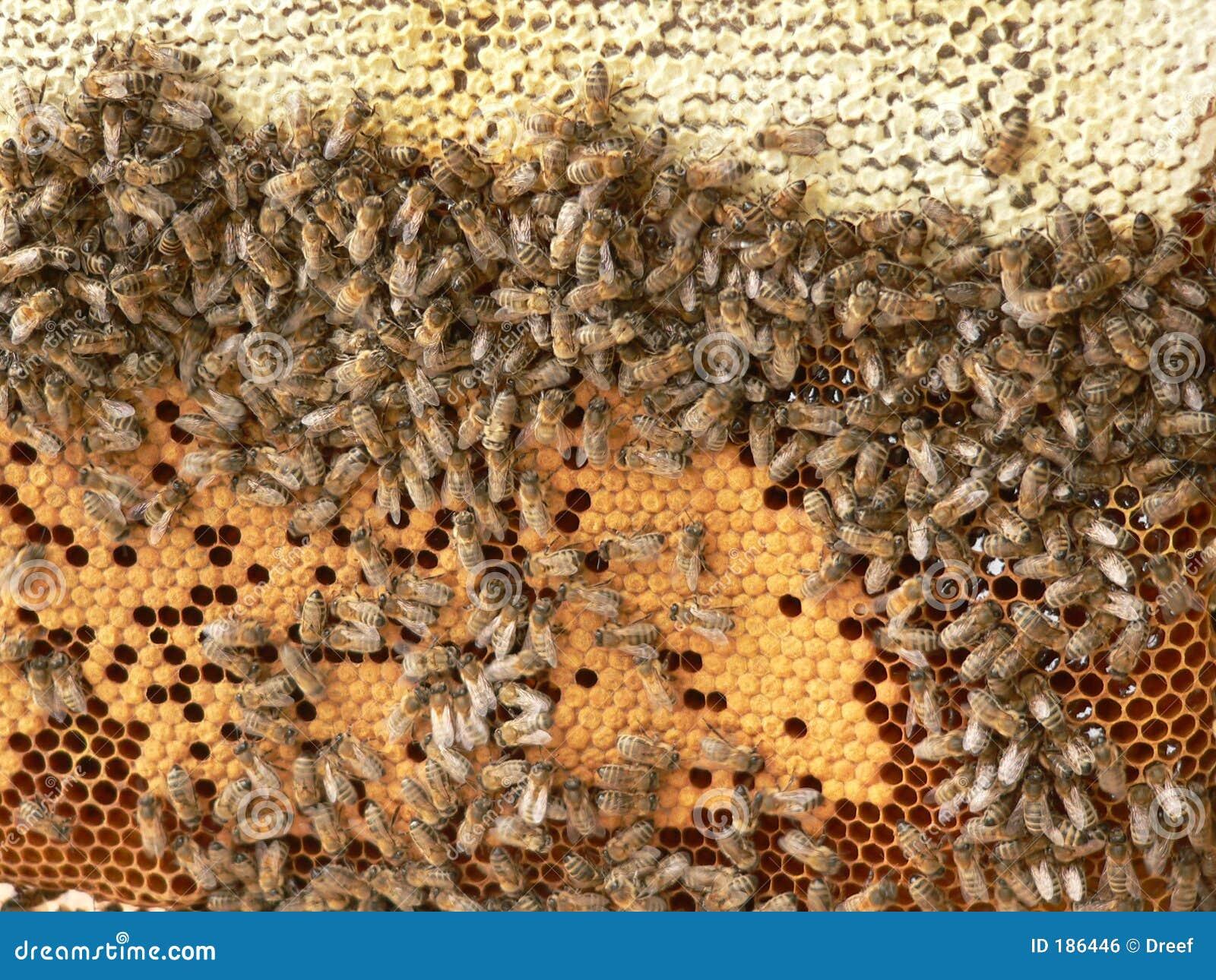 Ruche D 39 Abeille Image Libre De Droits Image 186446