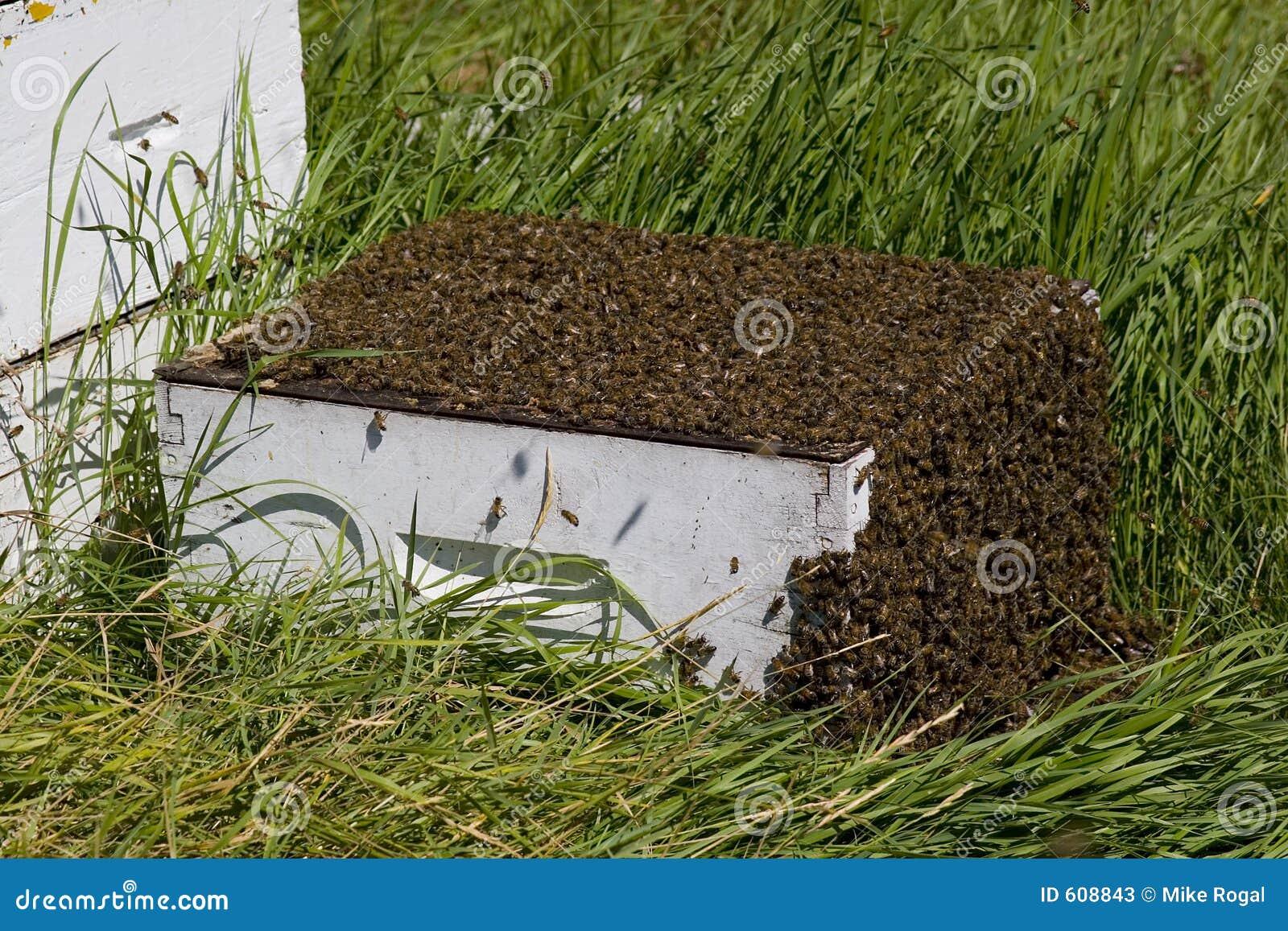 Ruche D 39 Abeille Image Stock Image Du Abeille Ferme