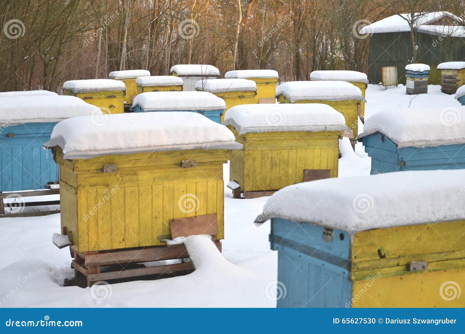 Ruches dans le rucher couvert de neige