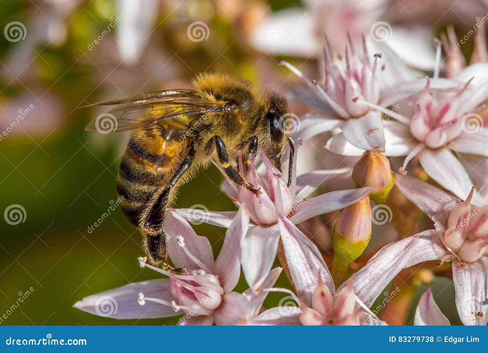 ` Ruchliwie Jako pszczoły `