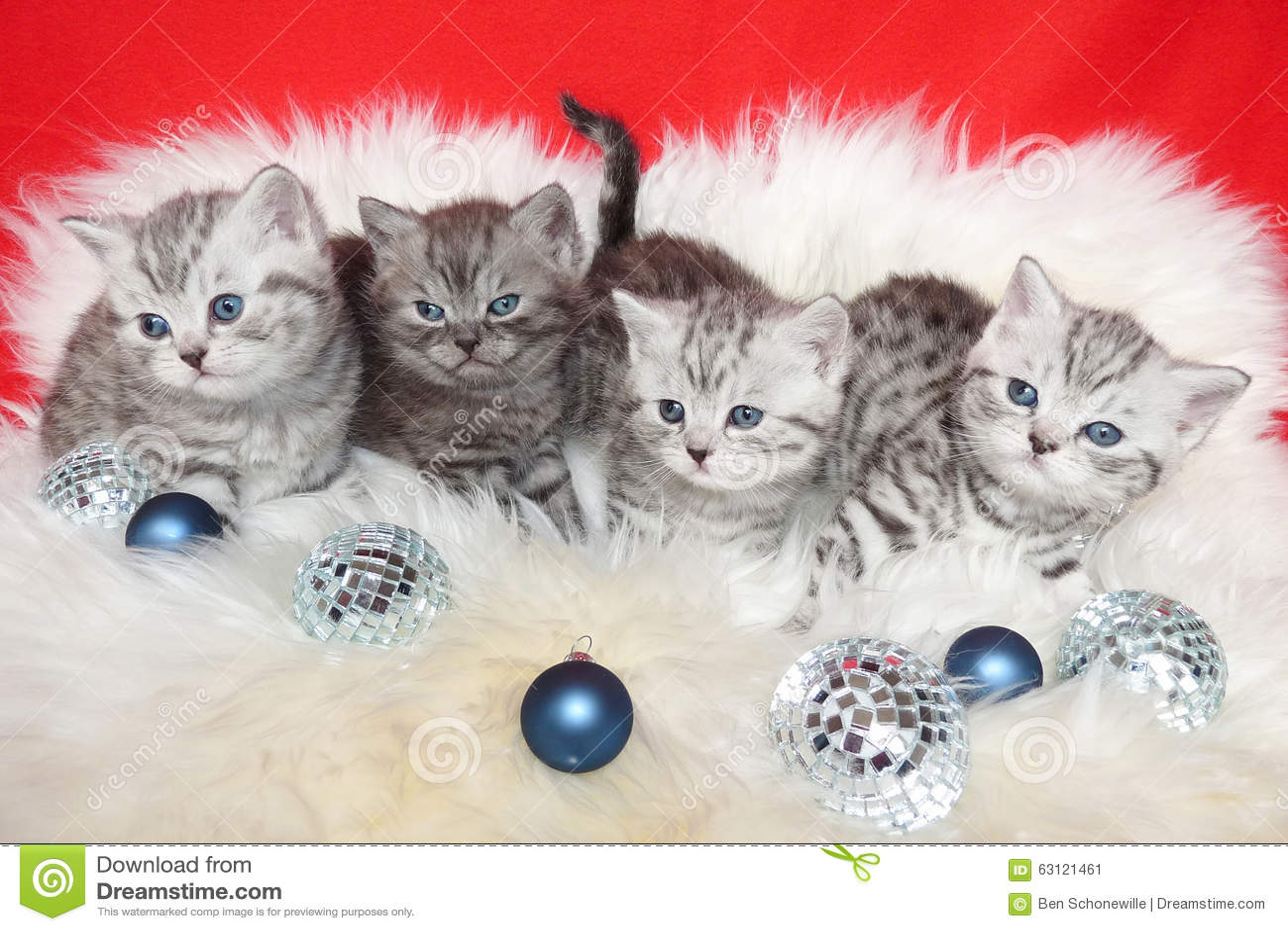 rudern sie junge katzen der getigerten katze auf schaffell. Black Bedroom Furniture Sets. Home Design Ideas