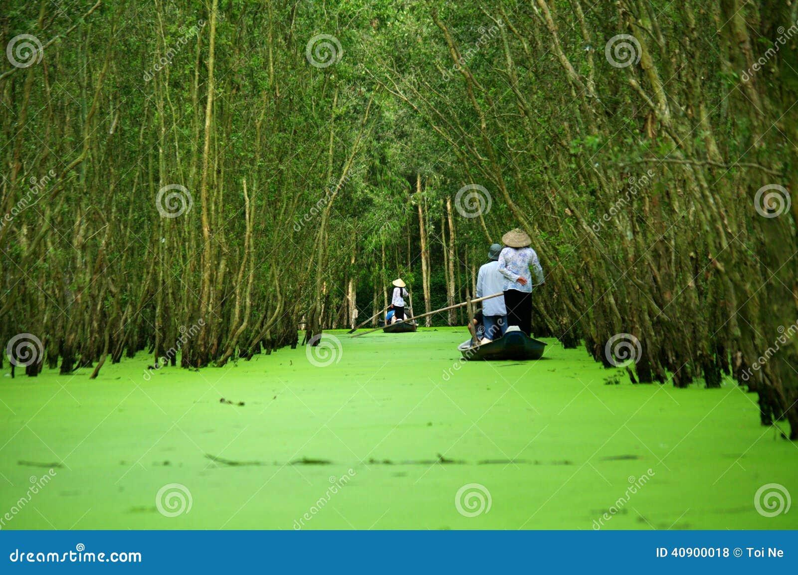 Rudern zum Kajeputbaumwald Tra SU
