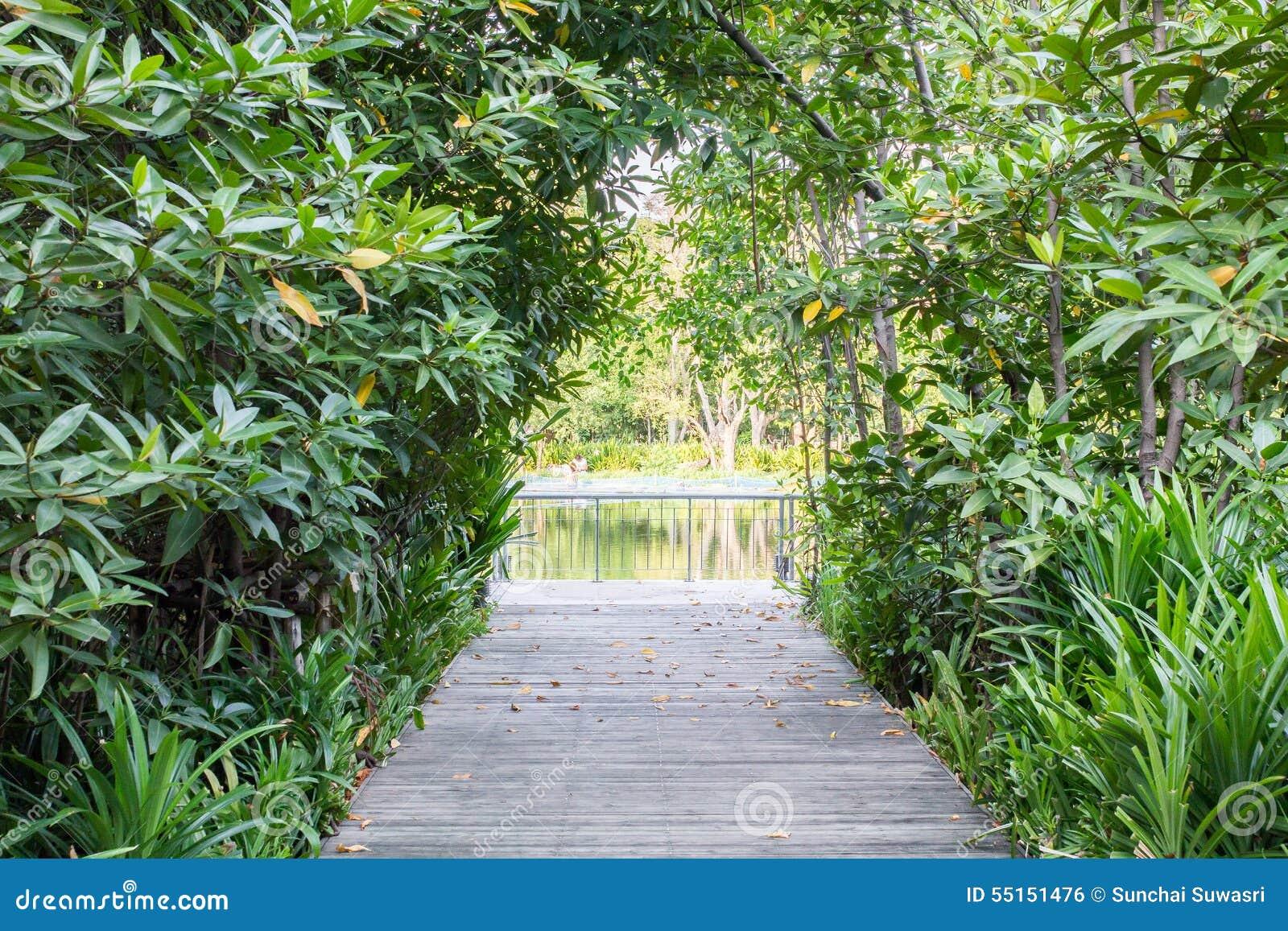 Rue de rivière de forêt