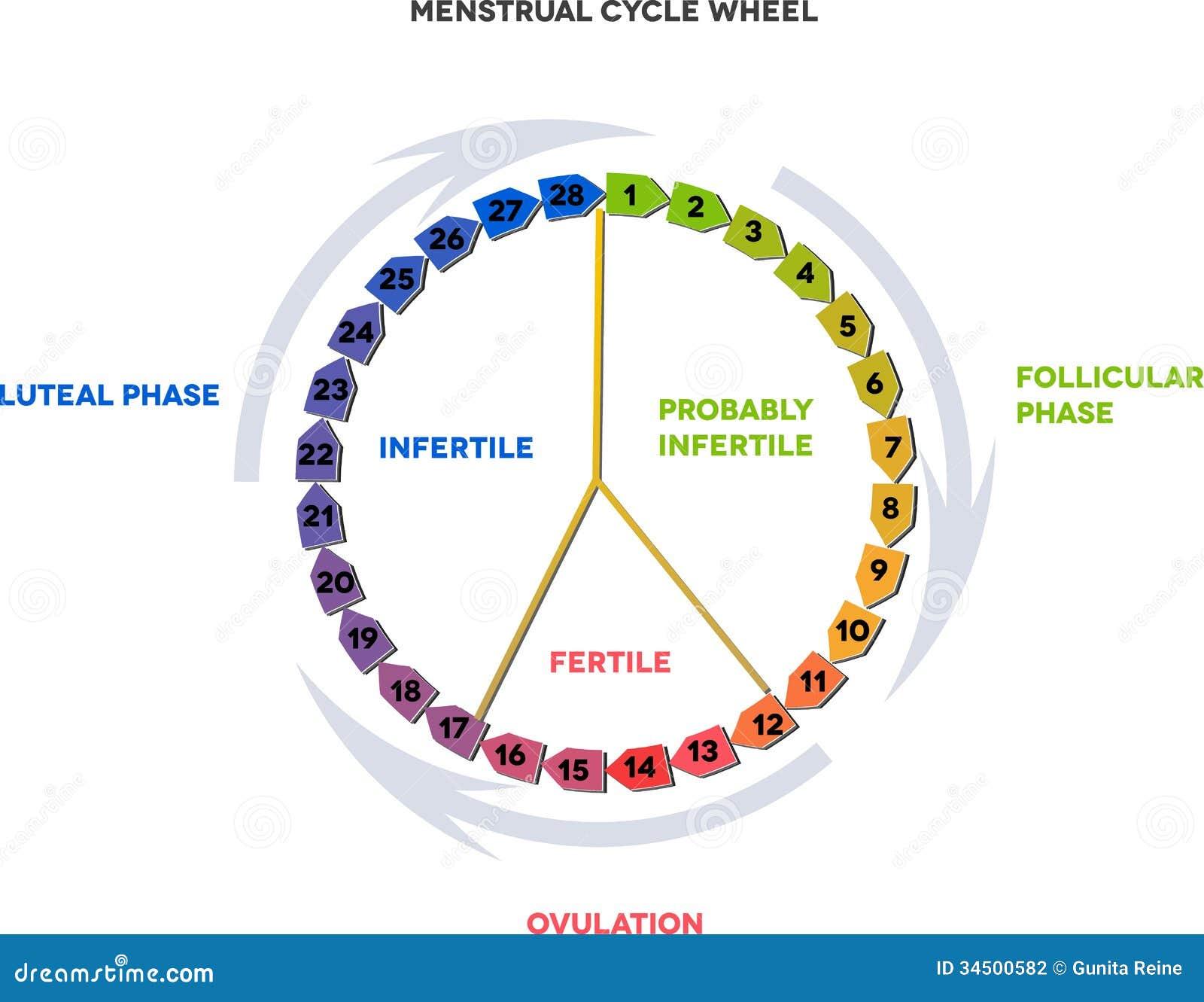 Menstrual menstruacion ciclo ovulacion y