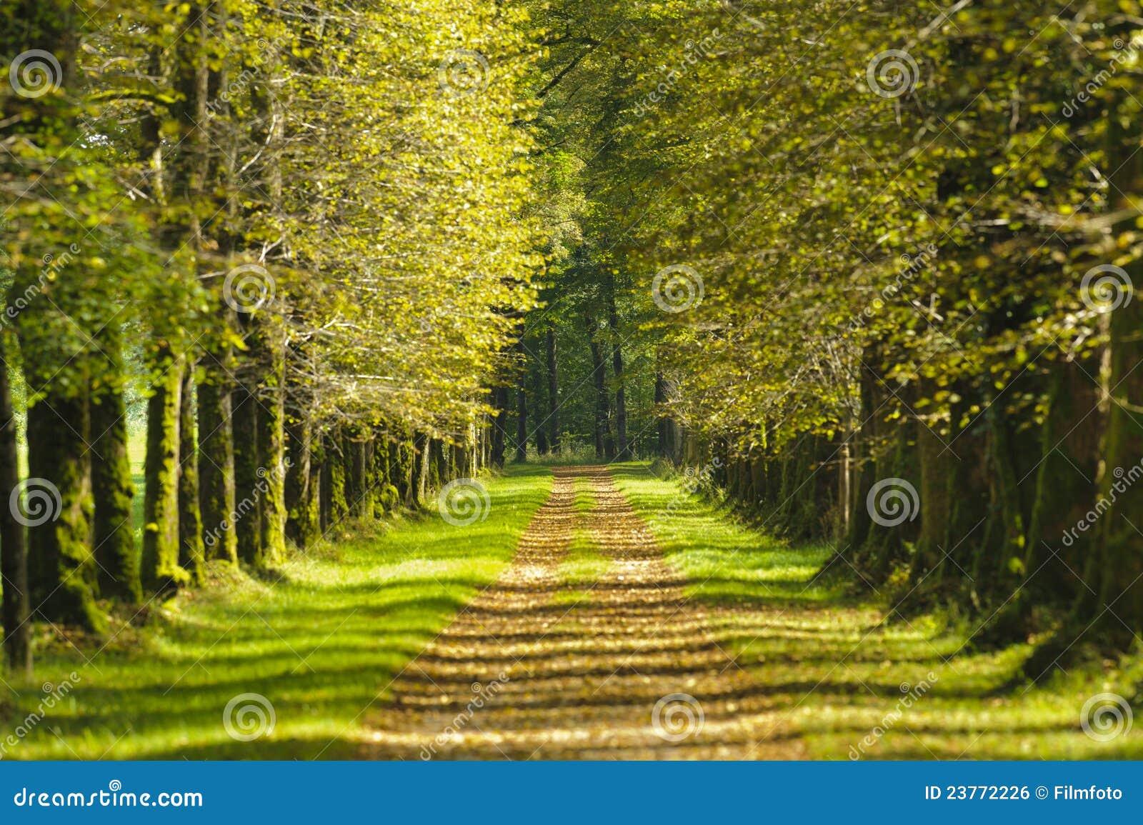 Ruelle d arbre