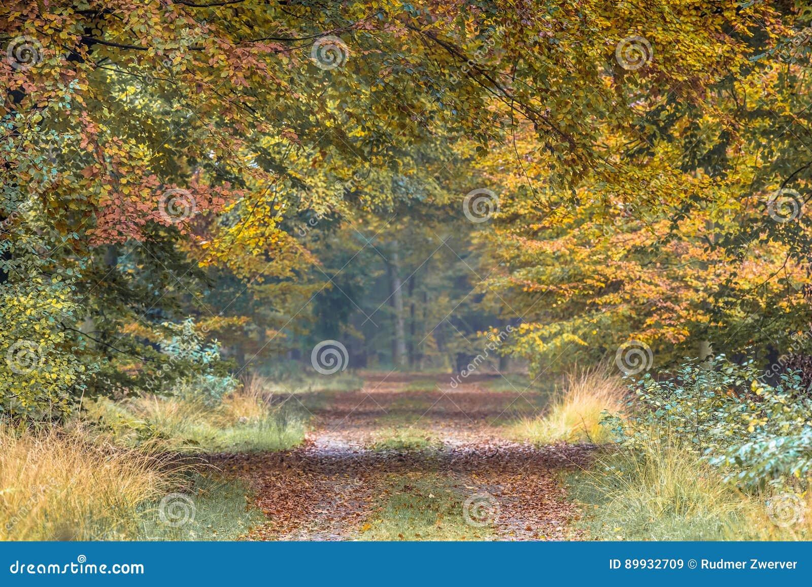 Ruelle d automne avec les feuilles jaunes et oranges de hêtre