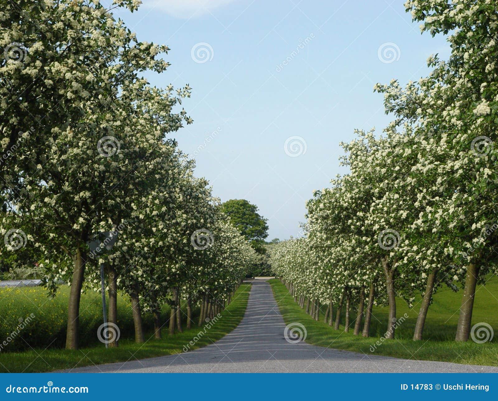 Ruelle de floraison