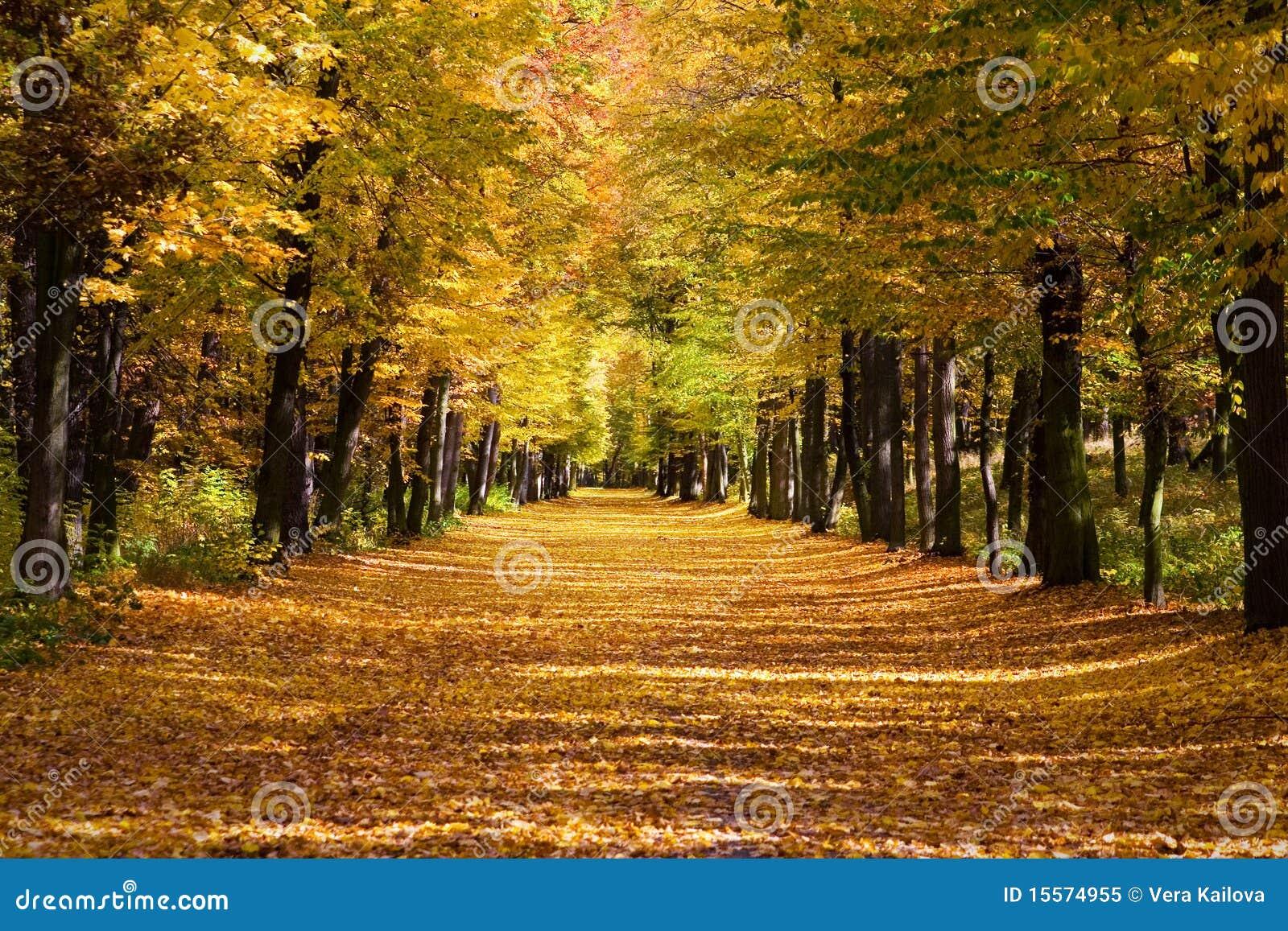 Ruelle de limette dans l automne
