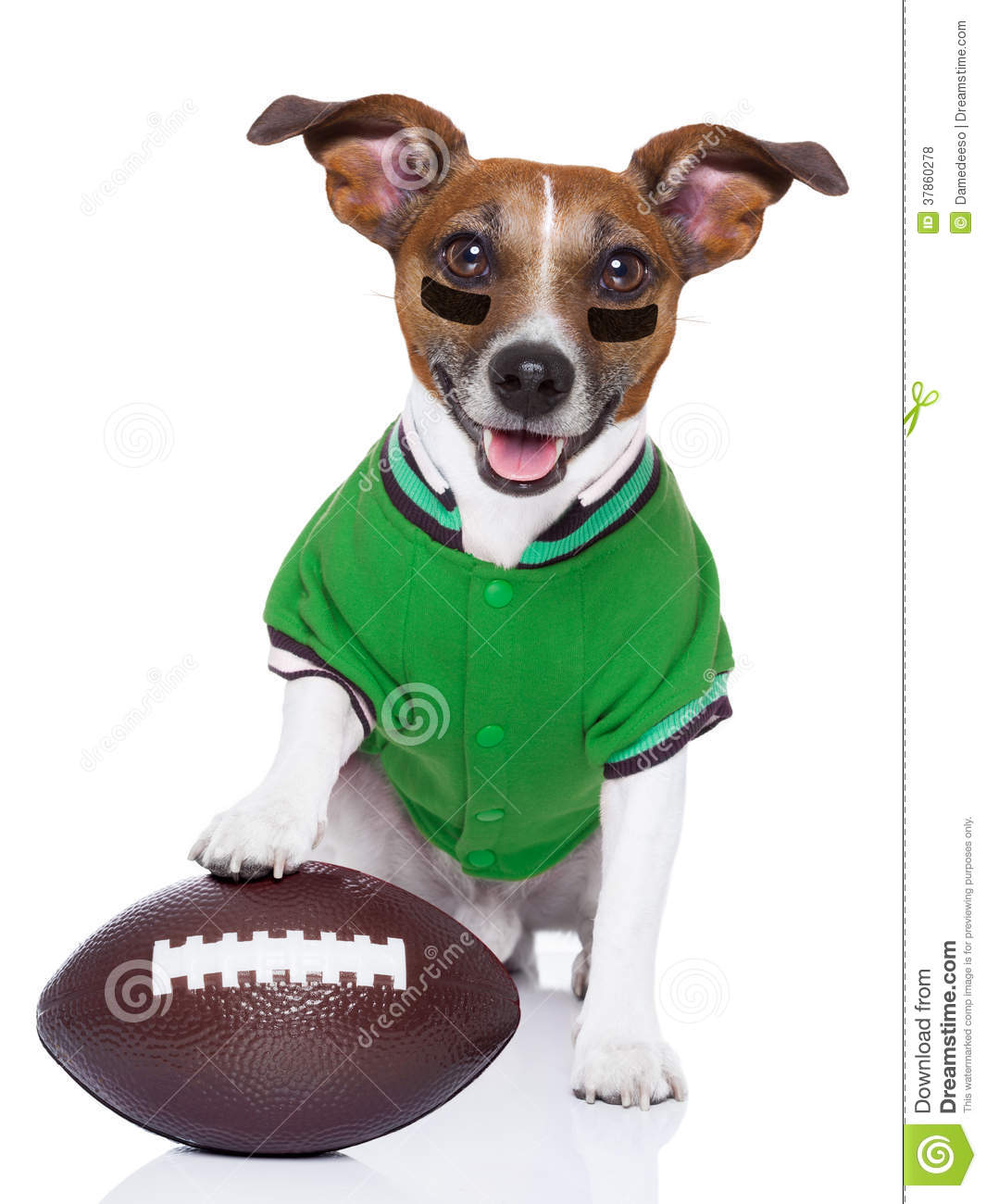 Rugby Shirt For Dog: Pretty Nun With Rugby Ball Isolated On The White Royalty