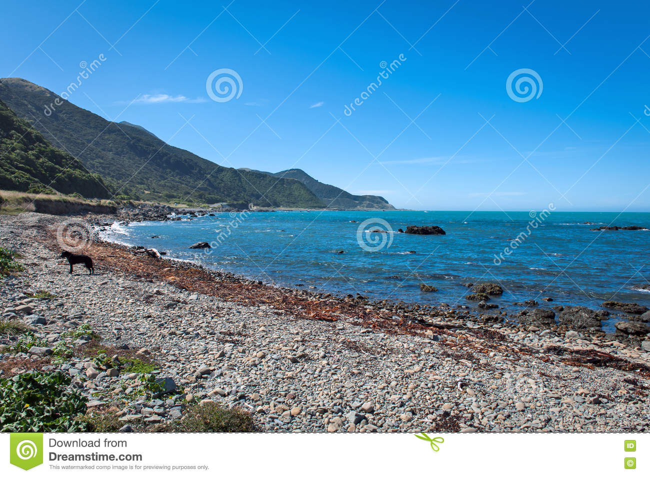 Rugged Coastline Of Kaikoura New Zealand Stock Image