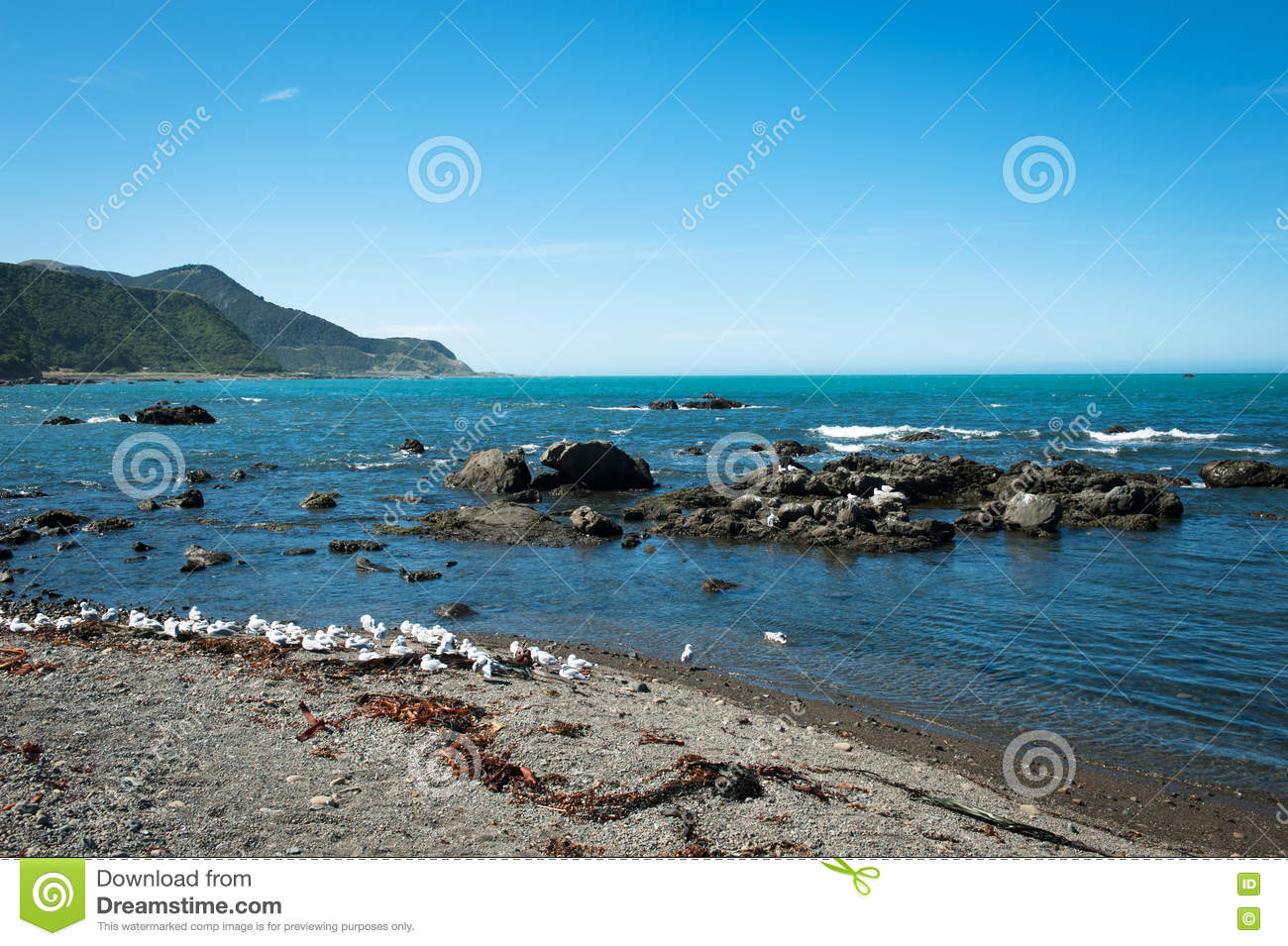 Rugged Coastline Of Kaikoura New Zealand Stock Photo