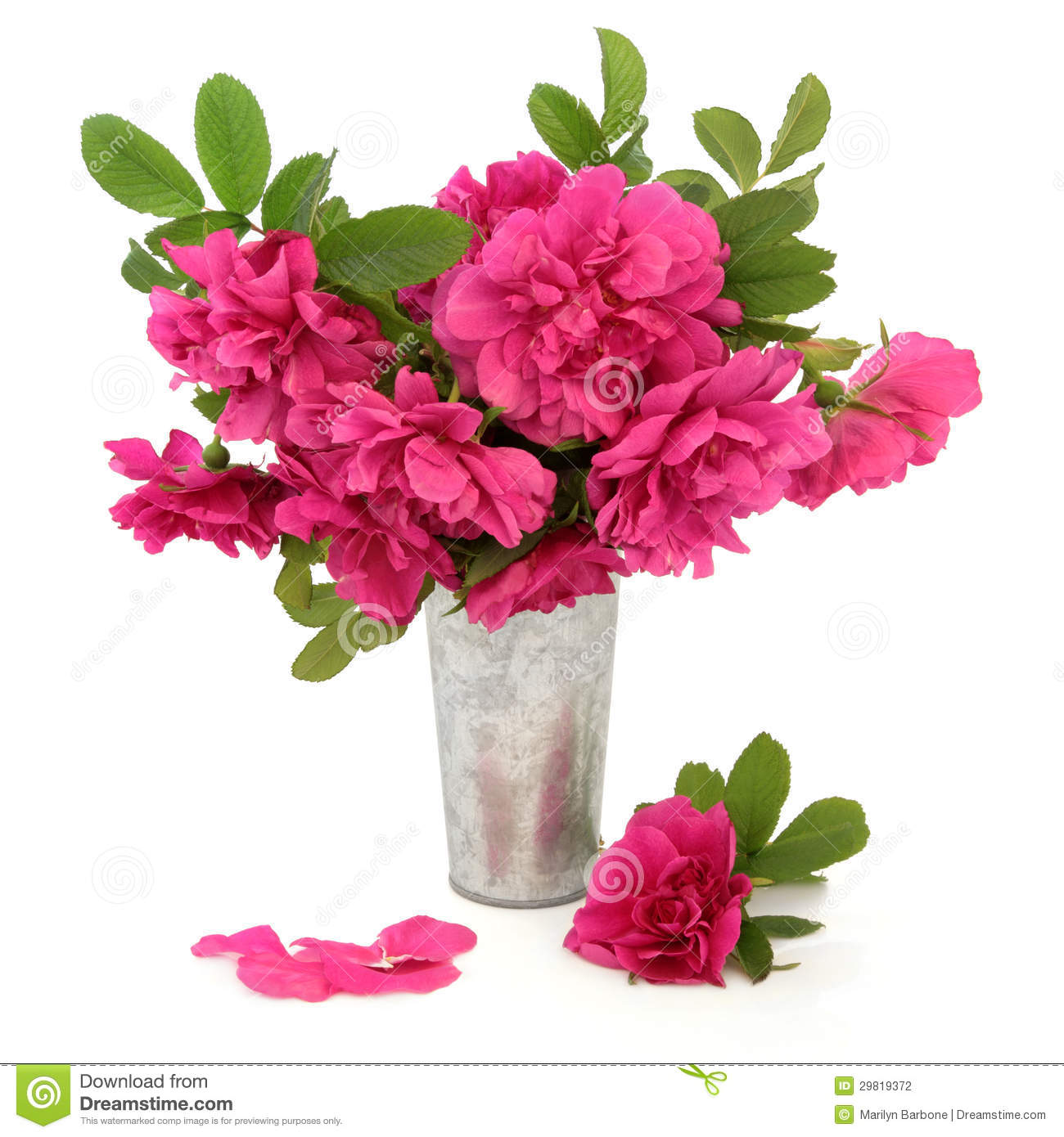 Rugosa rose flowers stock photography image 29819372 - Pot de fleur intelligent ...