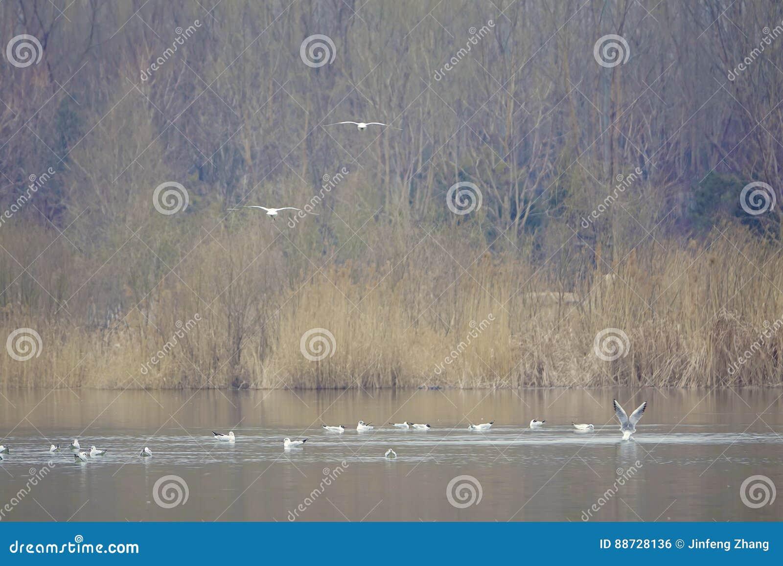 Ruhig Fluss