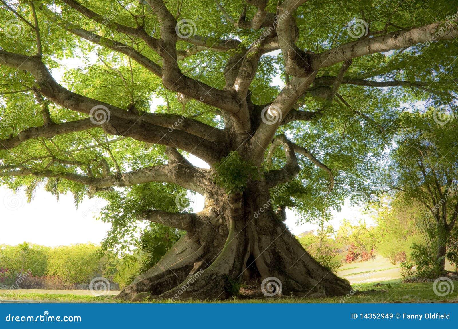 Ruhiger Baum