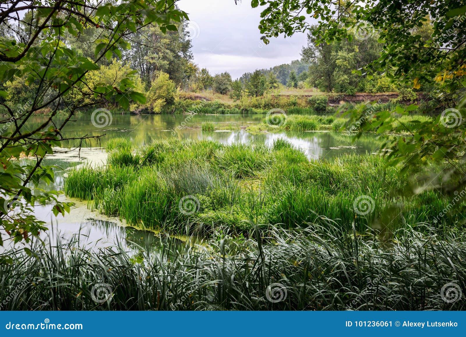 Ruhiger Fluss am Sommermorgen mit grünen Bäumen auf Hintergrund